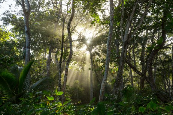 Light passing through the jungle