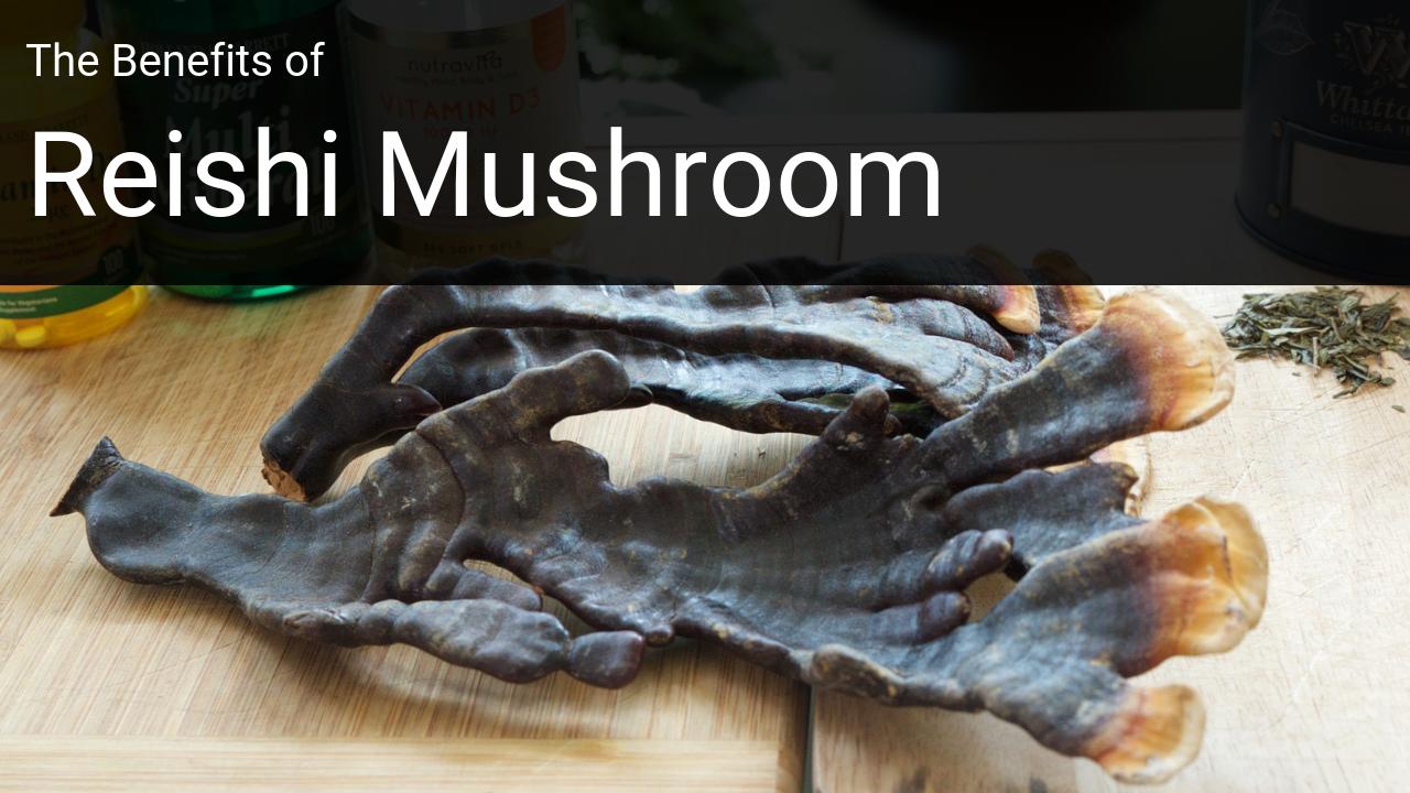 Reishi Mushroom Benefits | Life Coaching in the UK